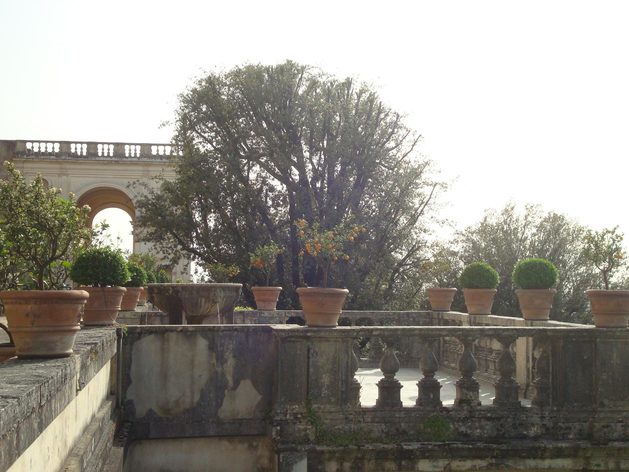 Villa D'Este citrus