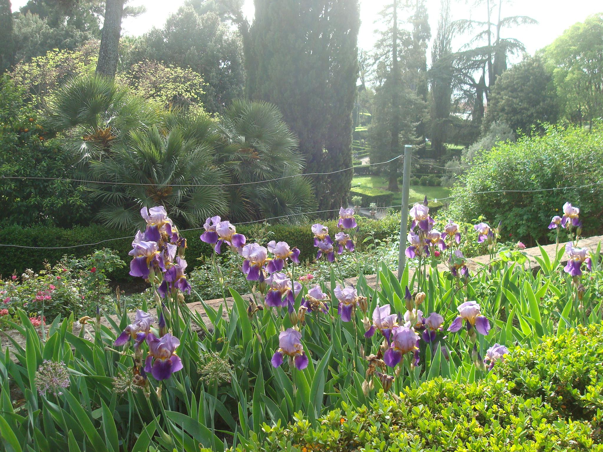 Villa D'Este irises